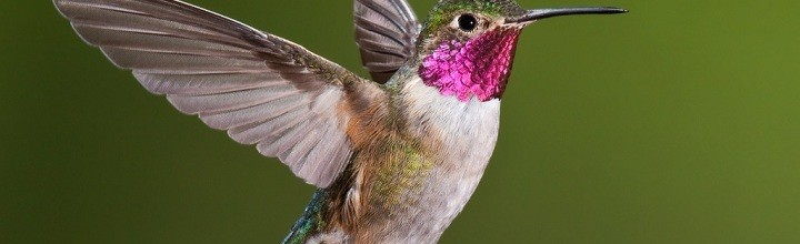 The 'Hummingbird' Algorithm and On-Page Optimization