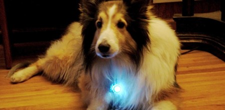 Top 10 Pet Gadgets That Your Pet Would Love to Have